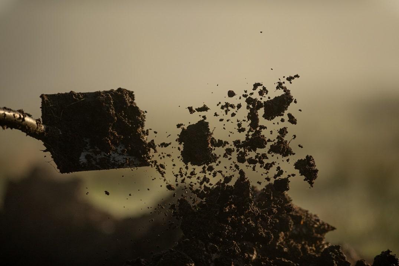 Saison d'extraction du Morta : après avoir sondé, creusez maintenant !